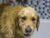 bañando-perros.jpg